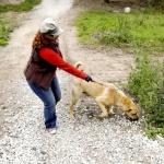 Ristisõda koerteomanike vastu